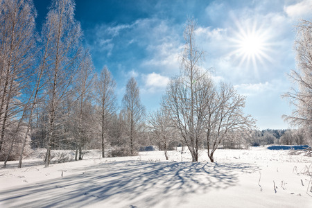 winterly: Snowcapped trees in the glistening sunshine, wonderful winter day