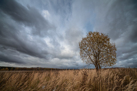Lonely tree in field under gloomy sky Stock Photo