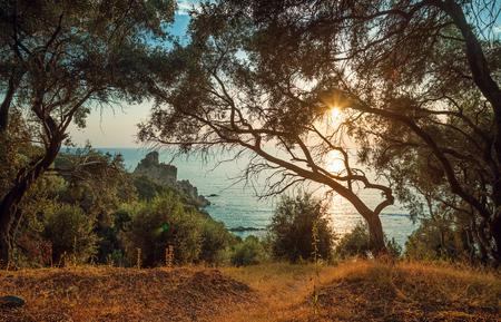 arboleda: Campo de olivos en la ladera por el mar jónico en contra de la puesta del sol