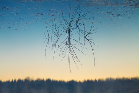 sky reflection: Upside-down reflection of branches sticking out of calm water and gradient sky Stock Photo