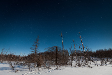 Winter night landscape with woods and dead trees under starry sky