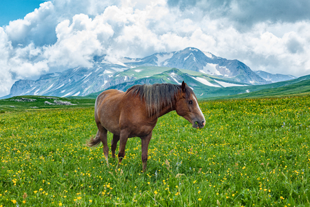 Horse grazing in mountain valley, Altai, Russia