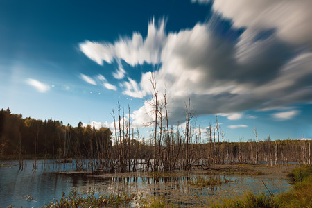 Dead trees in forest lake with motion blurred cloudscape