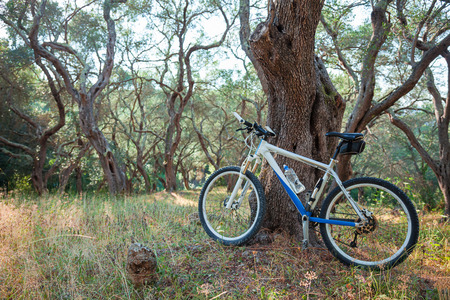 rest day: Mountain bike in an olive grove, against a tree; copy space