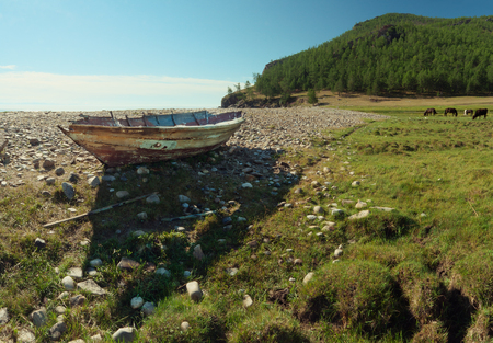 cirrostratus: Old boat on pebble coast at lake Baikal, horses pasture