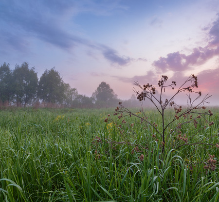 dewed: Early morning mist over green field, pastel sky, dewed grass on foreground Stock Photo