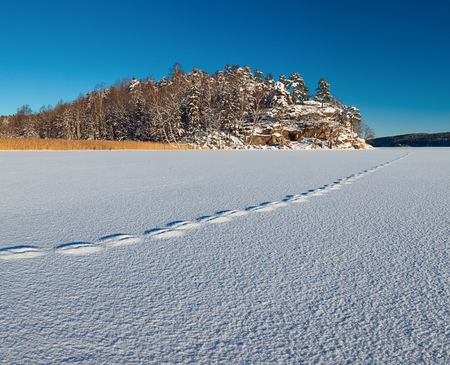 winterly: Norwegian landscape. White textured surface of snow with traces on it till distant rock and woods.