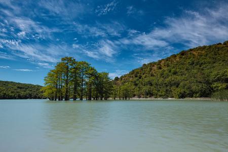 Small swamp cypress (Taxodium distichum) grove growing in water of Sukko lake,  Krasnodar Krai, Russia