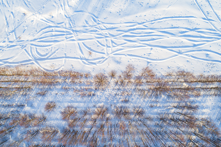 Top view of straight rows of trees with long shadows along a snowy field with shifty trails on a sunny winter day