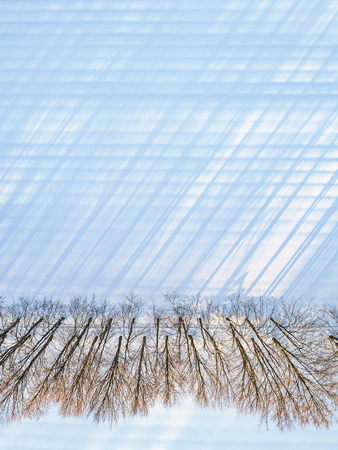 Top view of a straight line of trees with long shadows along a snowy field on a sunny winter day, copy space