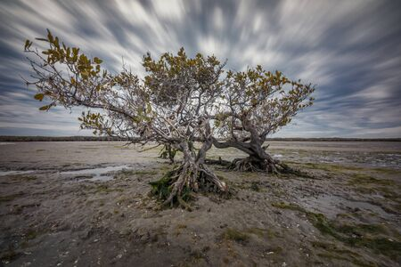 Low tide in San Ignacio Lagoon, Baja California, Mexico
