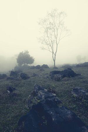 Fragile bare tree over the rocky hill in milky mist. Aquismon, Huasteca Potosina, Mexico.