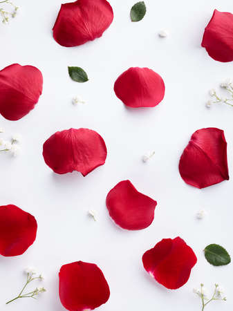 Contrast background with red rose petals on white, flat lay