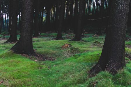 Hiking People Walking In Beautiful dark forest with tree roots Banco de Imagens