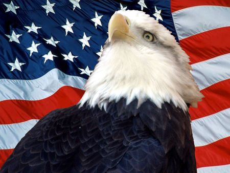 american eagle: proud american eagle and flag