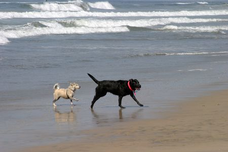 mans best friend: a day at the dog beach Stock Photo