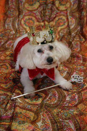 Beau in his  Costume as the King of the world photo