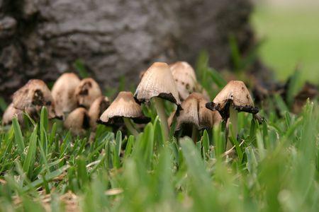 Unknown wild mushrooms