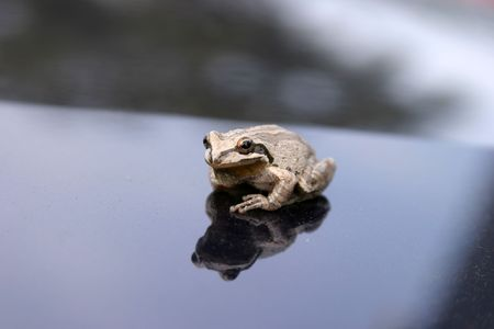 dampness: small brown tree frog