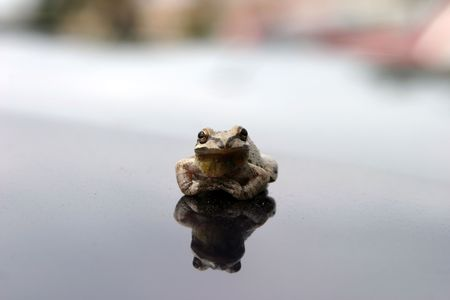 small brown tree frog