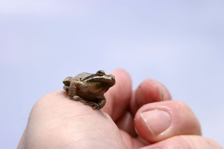 small brown tree frog on my hand photo