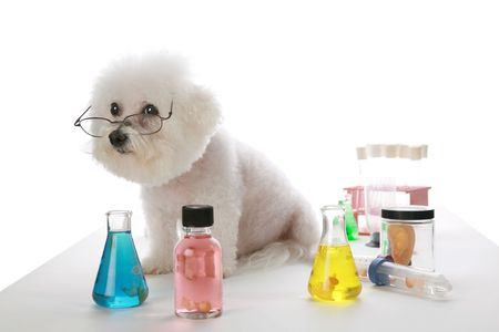 coagulate: Fifi the Bichon Frise works in a labratory and experiments with cloning human beings