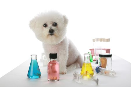 coagulate: Fifi the Bichon Frise clones a new human in her labratory Stock Photo