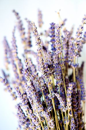 A bunch of dried lavender. photo