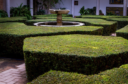 Hexagonal and other geometrical shape bushes form a little laberint around a water fountain