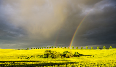 passing over: colorful rainbow after the storm passing over a field of grain
