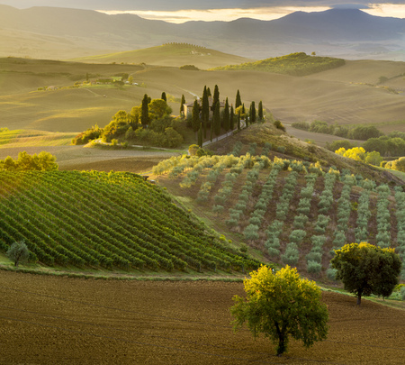 wine road: Pienza,Italy the famous Tuscan landscape at sunrise