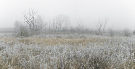 frosted: winter landscape, frosted grass in the fog