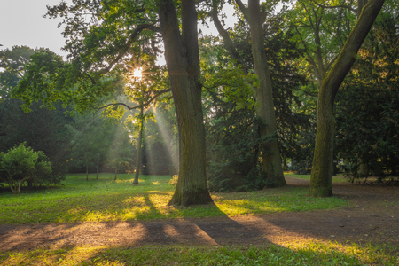 sunbeams passing through the leaves of trees in the spring park Stock Photo
