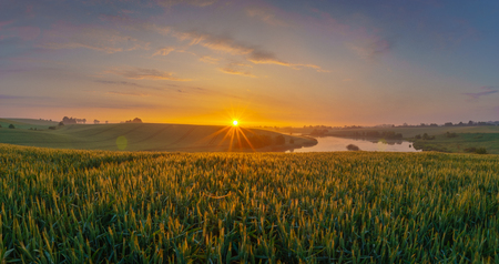sunrise over the spring field of young grain Standard-Bild - 102573355