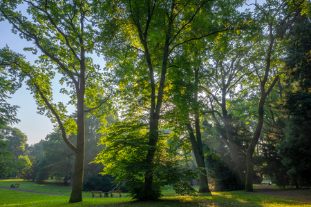 sunbeams passing through the leaves of trees in the spring park Standard-Bild