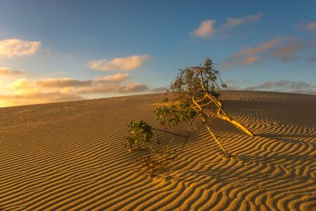 green tree buried by sand in the desert