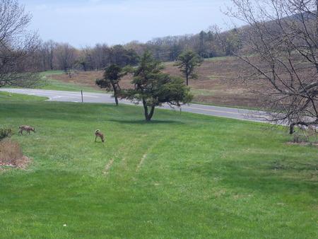 White tail deer Reklamní fotografie