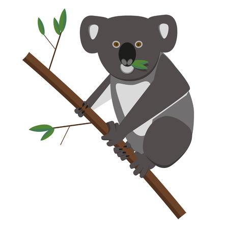 koala: Oso de koala eucalyptusleaves alimentarios. Vectores