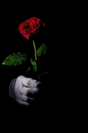low key image of a red rose with white glove holding it photo