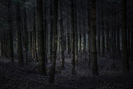 slecht uitziende herfst bos, toegevoegd vignet