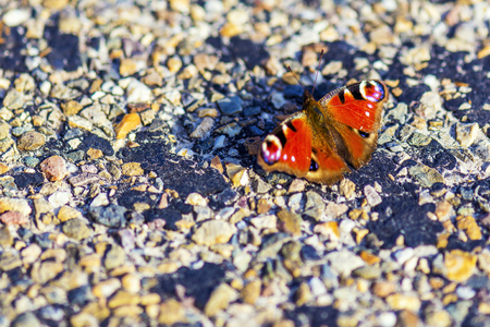 aglais io or peacock butterfly on rough surface Фото со стока