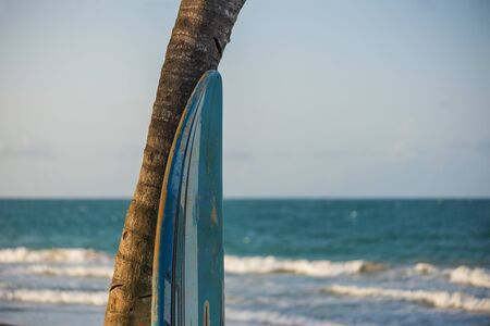 surfboard leaning against a palm tree with the ocean in the backgroung