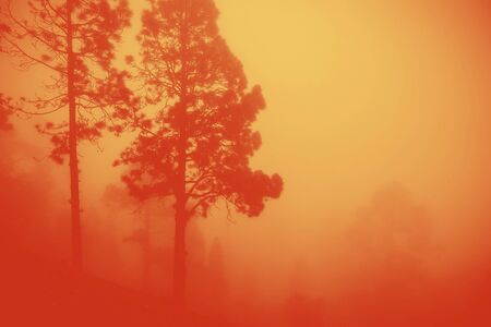 massive fire with red and yellow fog covering the trees in a forest caused by climate change and global warming
