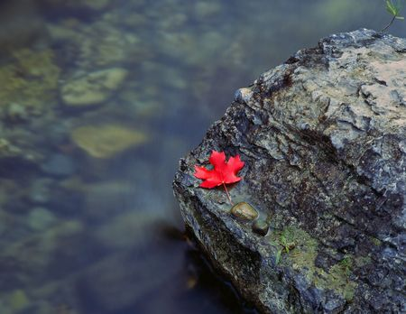 A canyon maple leaf on a rock in the Logan River, Utah. Stock Photo - 686581
