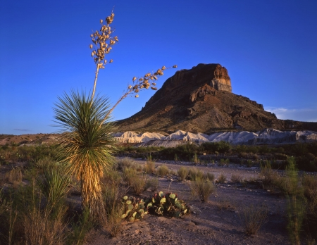 A soaptree yucca plant and Castelon Peak in Big Bend National Park, Texas.