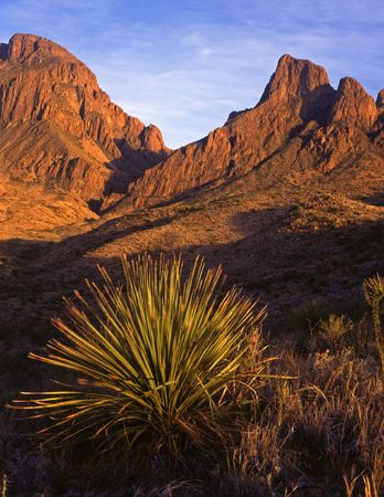 A desert plant and the Chisos Mountains in Big Bend National Park, Texas.