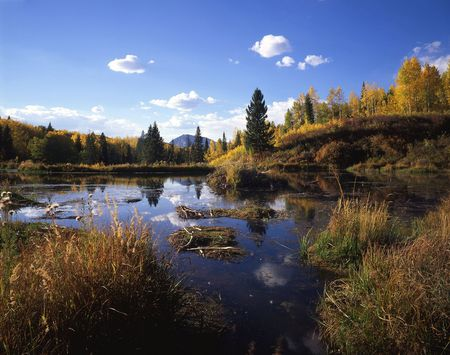 national forest: Un humedal en la zona de Gunnison Bosque Nacional de Colorado.  Foto de archivo