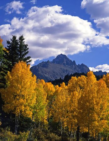 colorado: Mt. Sneffels and aspen trees in the Uncompahgre National Forest of Colorado, photographed during the autumn season.