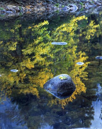 An oak leaf on a rock in the Merced River located in Yosemite National Park, California. Stock Photo - 725346