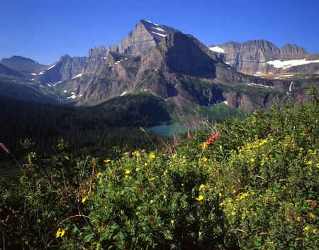 Mt. Gould and wild flowers in Glacier National Park, Montana.